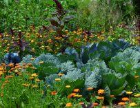 365 Days of Less Waste tips voor de tuin