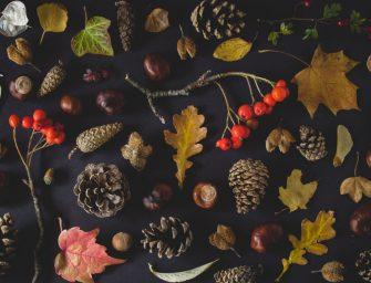 5x creatief met natuurlijke materialen: kastanjes