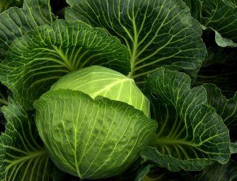 Duurzamer eten? Dit is er nu in het seizoen – winter